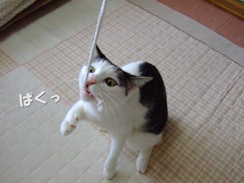 2010_0516(012).jpg
