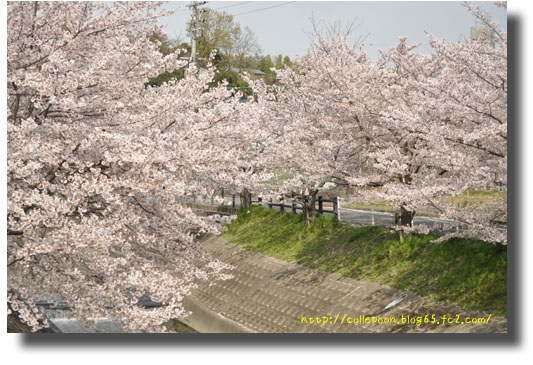 3月6日桜1アドレス入り