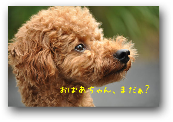 DSC_4277.jpg