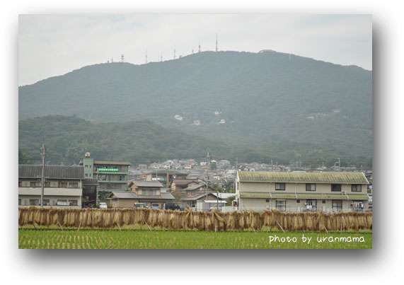 DSC_6254.jpg