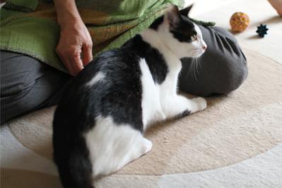 保護猫ちゃんの白黒ちゃん