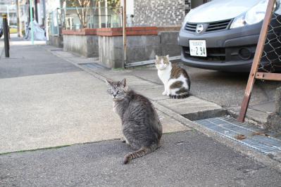 kiki さん家の飼い猫ちゃん