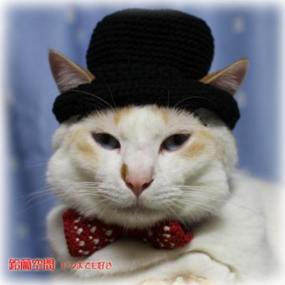 はくちゃん試着の山高帽と水玉柄蝶ネクタイ