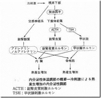 体温調節中枢11