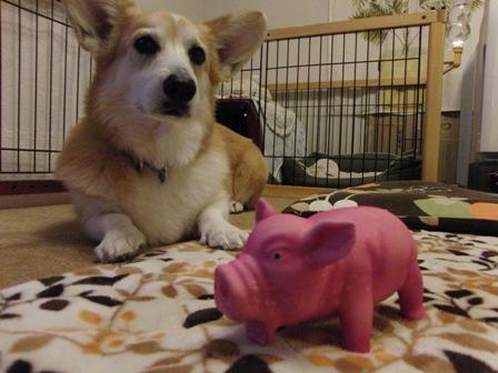 豚さん 早くください!