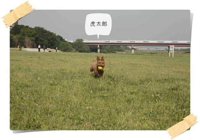 虎太郎の友01