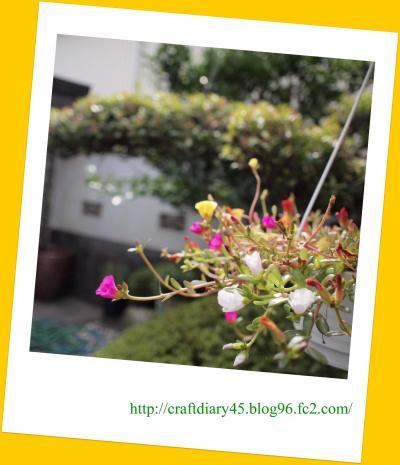 PA030067_convert_20111003135752.jpg