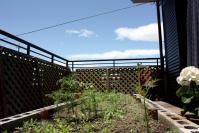 100616 菜園3