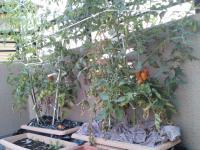 100719 菜園1
