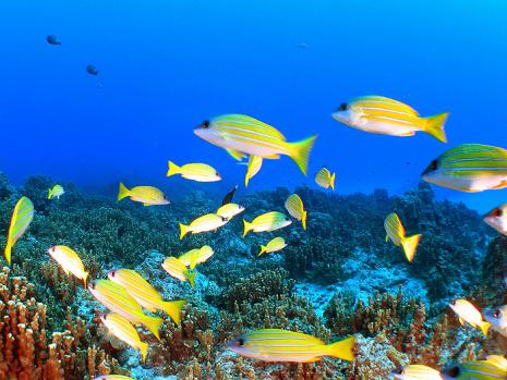 two-coral_4_17_04-03.jpg