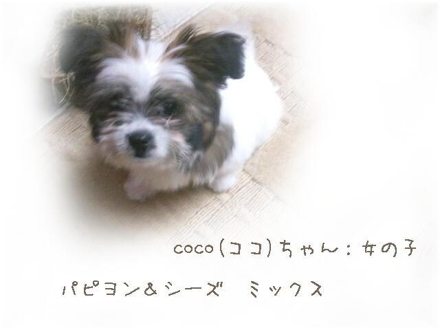 cb163_20100613215737.jpg