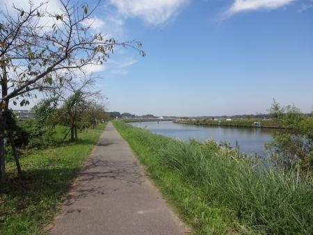 041印旛沼から新川沿いを