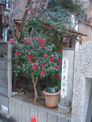大安寺の山茶花(さざんか)
