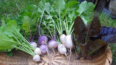 1365収穫野菜