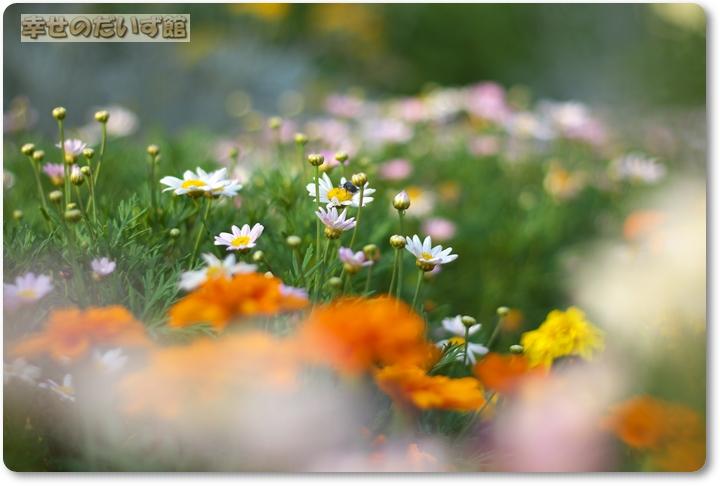 daizukanIMG_1685.jpg