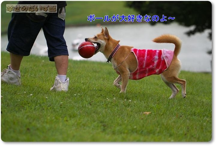 daizukanIMG_3109.jpg