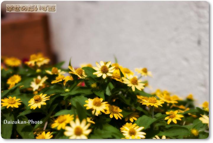 daizukandaizukan-photo-0004.jpg