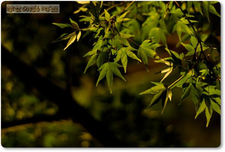 daizukandaizukan-photo-0509.jpg
