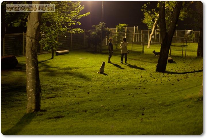 daizukandaizukan-photo-0516_20110810025958.jpg