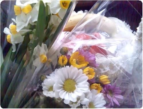 フクロモモンガ茶茶のお葬式