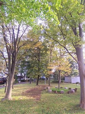 近所の「森」