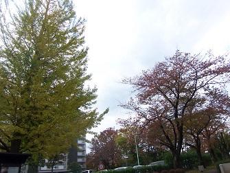 団地の秋2014 (3)