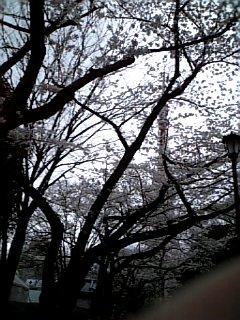 景色 2010年4月2日のウォークラリー 桜の向こうに東京タワー