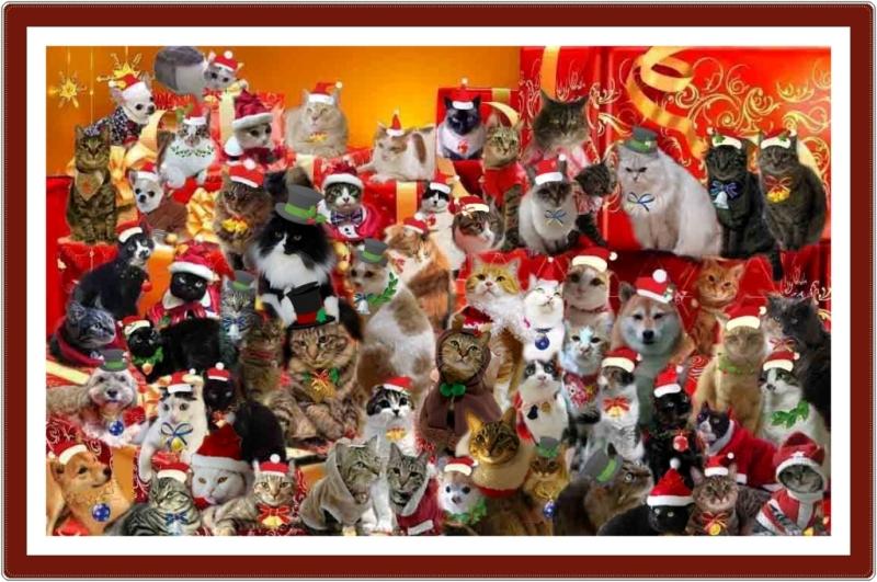 20111224黒猫さんのお宅でクリスマスパーティー