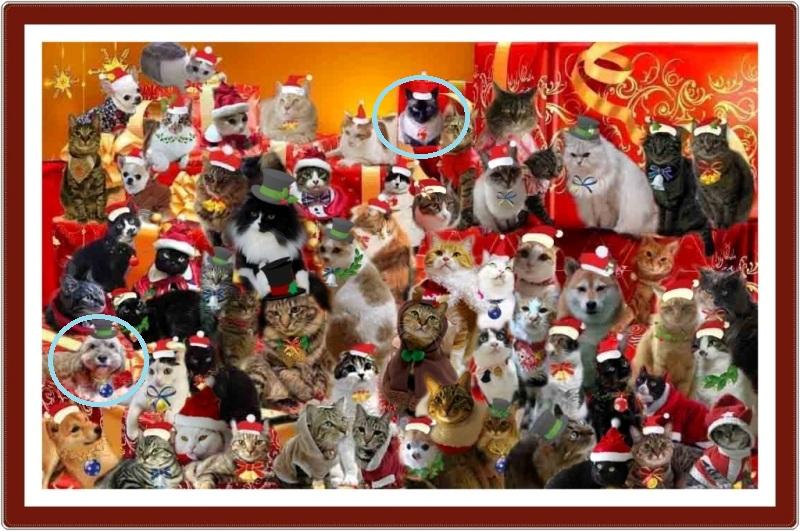 20111224黒猫さんのお宅でクリスマスパーティー - コピー