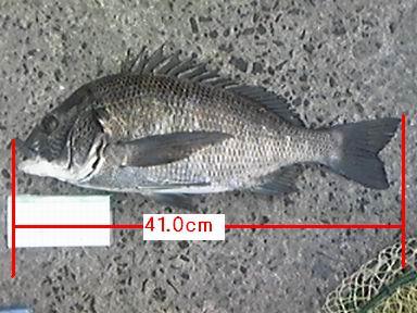 20111106izumiootu3.jpg