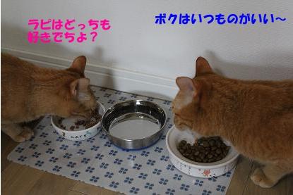 can4.jpg