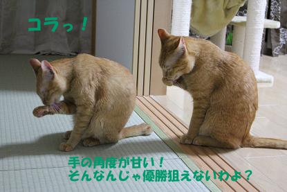 pea1.jpg