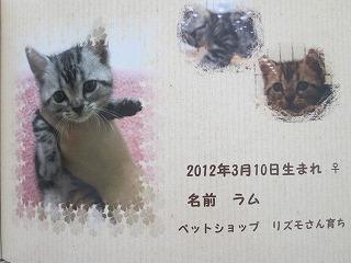 2013_0320_125936-IMG_7189.jpg