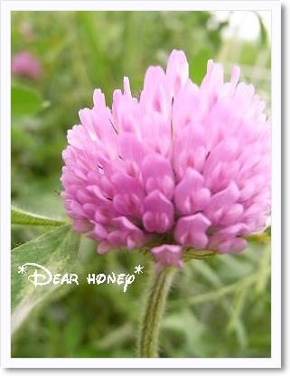 100513flower.jpg