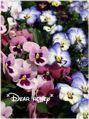 100411 flower