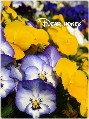 100411 flower2