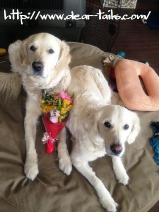 退院祝の花