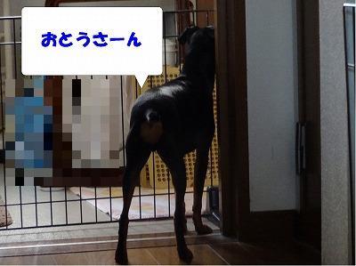 s-お父さん2014107