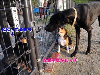 s-大きい子と20143