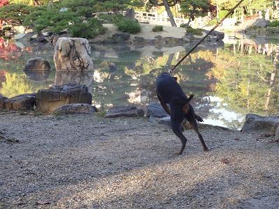 s-公園201411221
