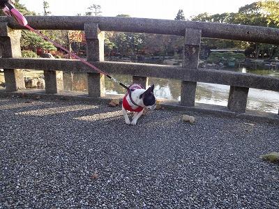 s-公園散歩201412①2