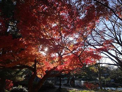 s-公園散歩201412①3