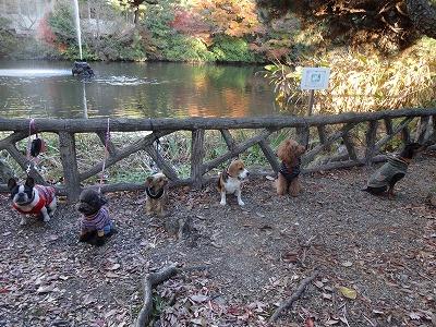 s-公園散歩201412①13