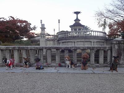 s-公園散歩201412②4