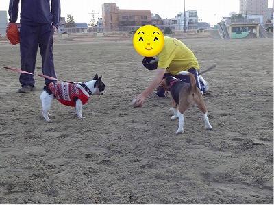 s-公園散歩201412②7
