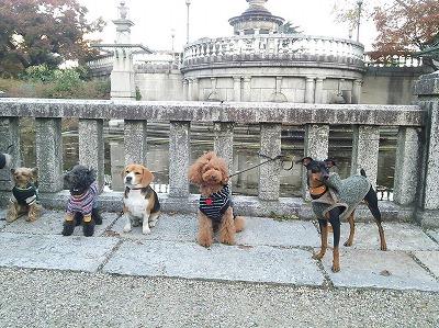 s-公園散歩201412②8
