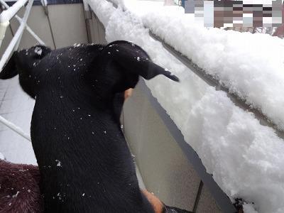 s-雪20144