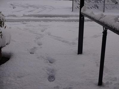 s-雪20146