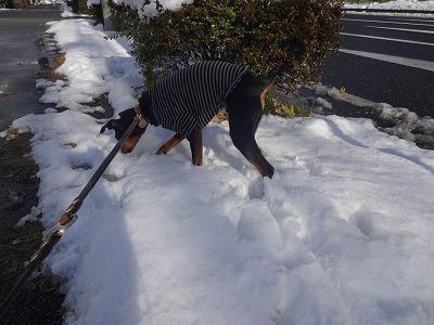s-雪②201412