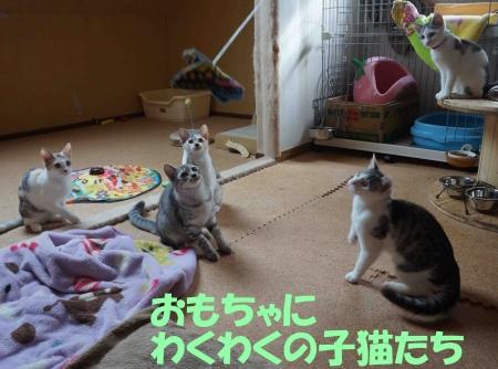 わくわく子猫ーズ